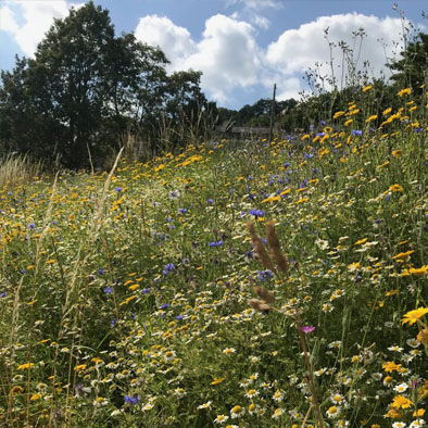 Rewilding - Our wildflower meadows coming to life